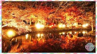 BEAUTIFUL FALL FOLIAGE AT NIGHT IN KYOTO JAPAN 💙 AUTUMN COLORS