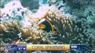 Today Show, Coral Spawning Story Thumbnail