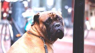 Собака друг человека. Очень трогательная история.