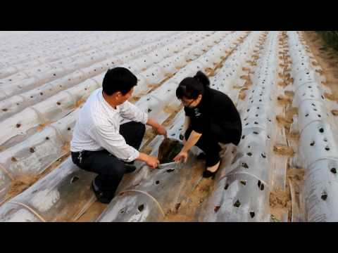 Meet Nature & More grower Wenbo Pan