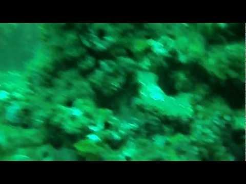 Adelaide Dive 2012 11 24 1080p