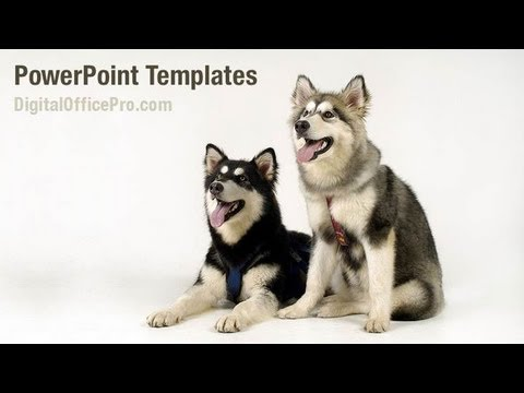 Cute pet powerpoint template backgrounds digitalofficepro 08454w cute pet powerpoint template backgrounds digitalofficepro 08454w toneelgroepblik Choice Image