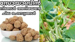 ശരിക്കും ഏതാണ് സോയാബീൻ   Facts about soya bean and soya chunks malayalam   soybean recipe malayalam