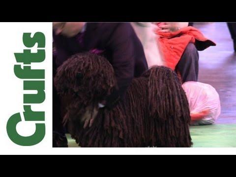 Crufts 2012 - Hungarian Puli Best of Breed