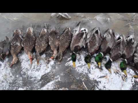 2016 Spokane Washington Duck Hunt 89 ducks and 8 geese