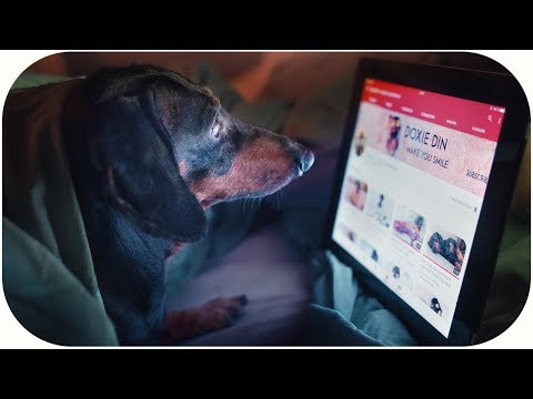 Gadget mania! Funny dachshund dog video!
