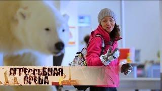 Посреди льда | Агрессивная среда с Александрой Говорченко