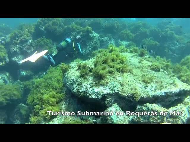 Turismo Roquetas de Mar - Fondos Marinos