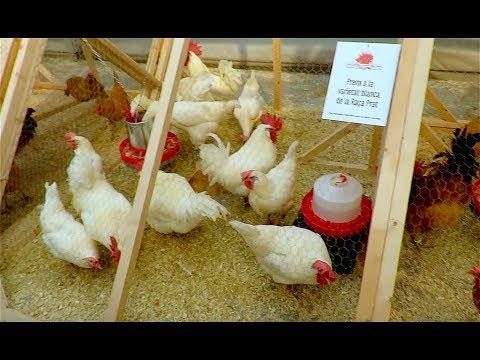 44a Fira Avícola - El Prat de Llobregat