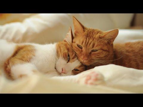Спокойной ночи - ПОЖЕЛАНИЯ - Поздравительные картинки к