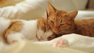смешные кошки и коты спокойной ночи!