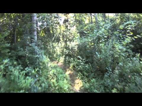Morton Taylor Trails - East Loop