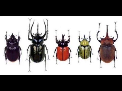 Познавательное видео для малышей Мультфильмы детям. Жуки. Beetles. Қоңыздар. Escarabajos. Böcekleri