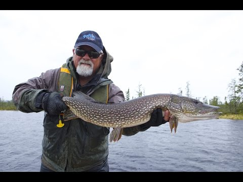 Giant Pike of Leuenberger's Kag Lake | Ontario