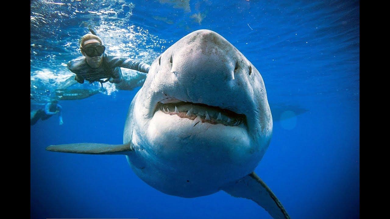 ένας καρχαρίας