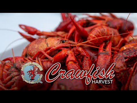 2020 Crawfish Season Starts Big