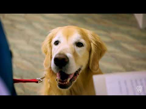 A Day in the Life of a Mayo Clinic Caring Canine