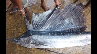 Sri Lanka Negombo fish MARKET नई nieuwnew neu ekstrim