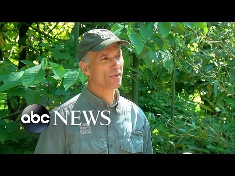 Gorilla World at Cincinnati Zoo Reopens After Boy Fell Into Enclosure
