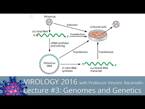 Virology Lectures 2016 #3: Genomes and Genetics