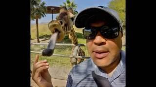 Селфи с животными/animals Selfies