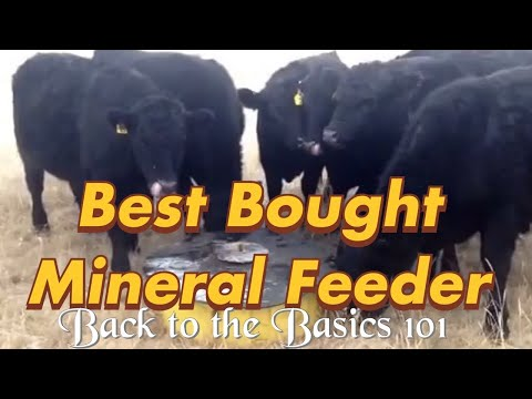 The Best Store-bought Mineral Feeder Ever!