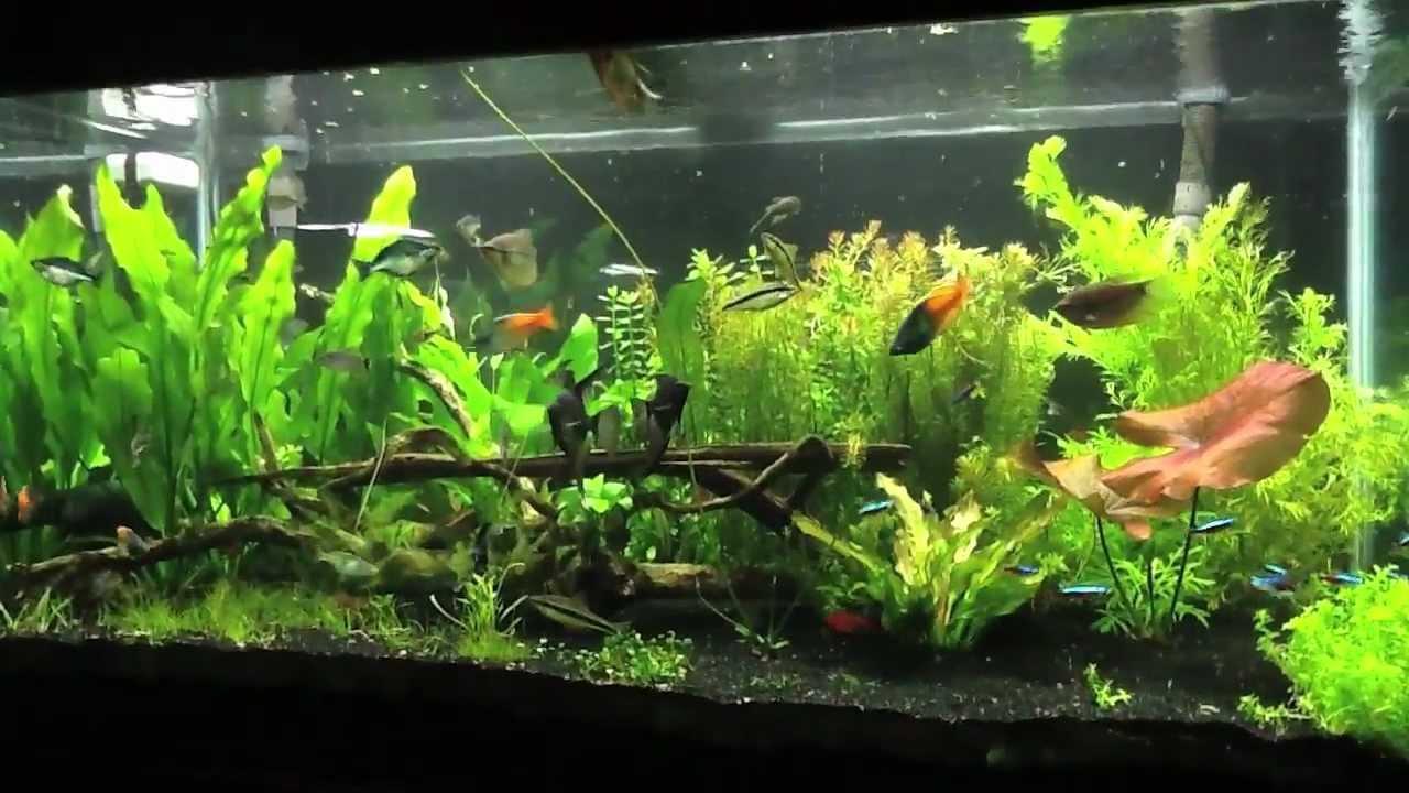 Genesis of a 120 gallon fish tank - YouTube
