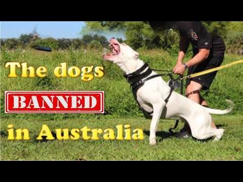 The dogs banned in Australia