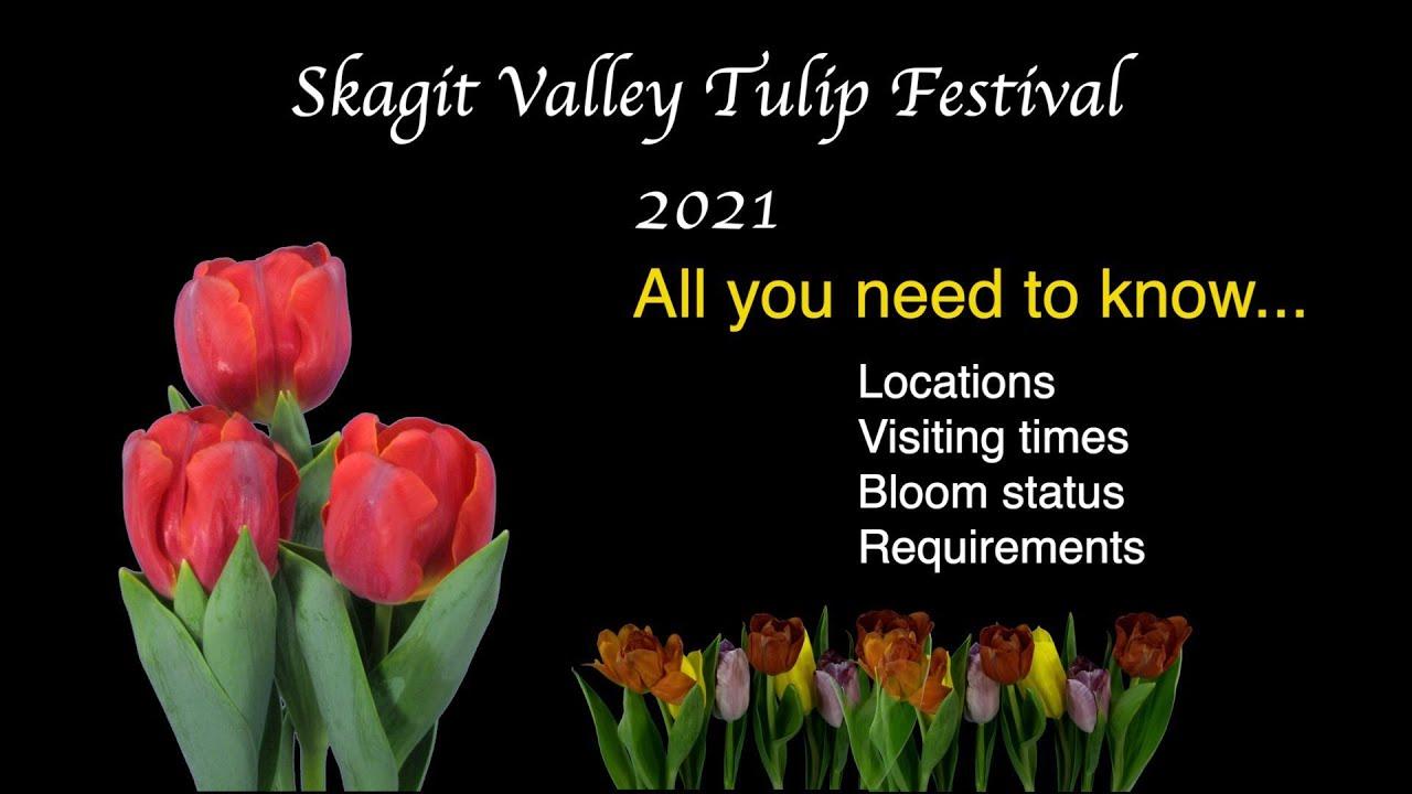 Skagit Tulip Festival 2021 Best Info