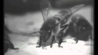 Пчеловодство, павильонное разведение пчел в  СССР