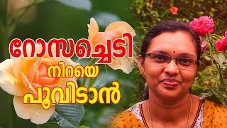 Rose flower gardening step by step in Malayalam