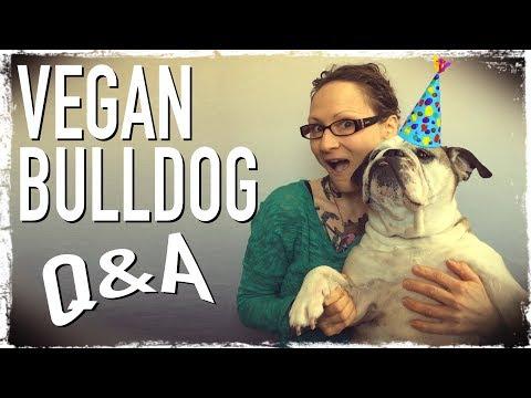 Vegan Bulldog Q&A: Ooby Birthday Special
