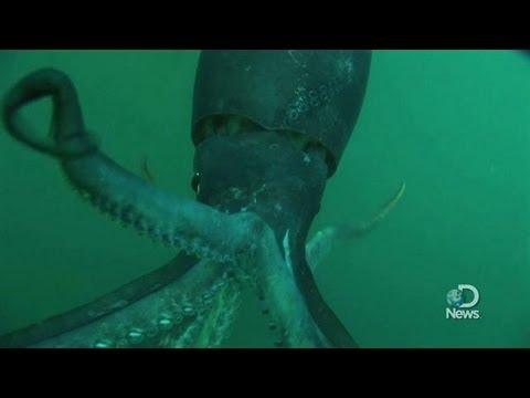 History of Kraken