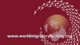 "World Migratory Bird Day 2013 - ""Networking for migratory birds"""
