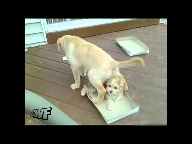 CuteWinFail: Peeing Dog Fail