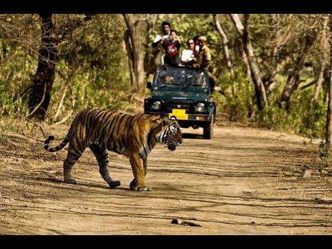 Jim Corbett National Park Wildlife Safari Sitabani Forest Reserve