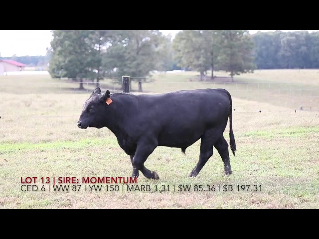 Edgewood Angus Lot 13