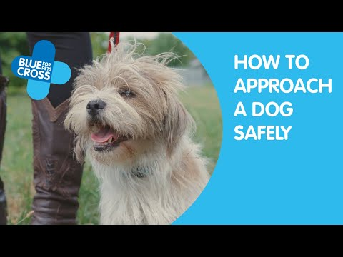 How To Approach A Dog | Blue Cross