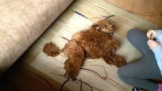 Как обучить собаку командам 🐕🐶🐩😕????(