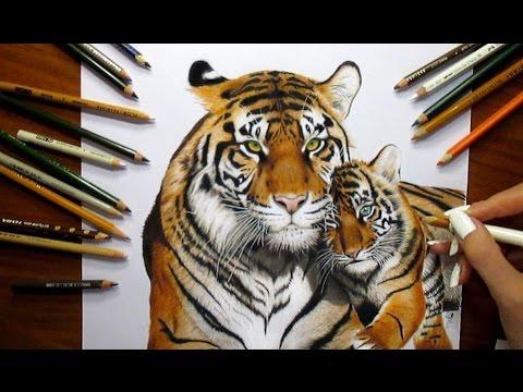 Colored Pencil Drawing Tigress And Tiger Cub Speed Draw