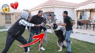 ردة فعل لوسي وأذكى كلب بالعالم يوم هجموا علينا ناس واضربونا قدامهم !!