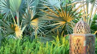 Gambar cover Large Tropical Modern Garden Highland Landscaping