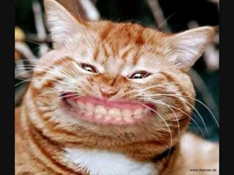 Lustige Bilder Tiere Lustige Bilder Von Tieren 200 Kostenlose Fotos
