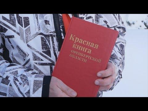 UTV. В 2018 году в Красная книга Оренбургской области пополнилась на 3 вида птиц и 6 видов растений