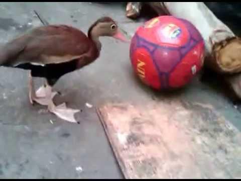 Copia De Pichiche Pijije Jugando Futbol Mejor Que Messi Youtube
