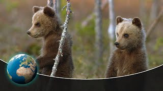 Three young bears find their way in the world