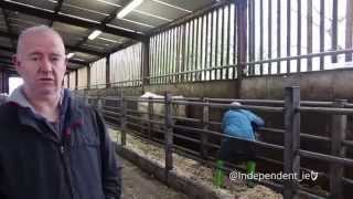 Irish Independent Report on Benjy Rescue 2014