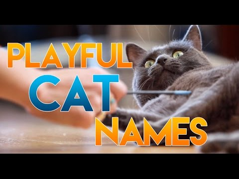 How to Name Your Playful Cat