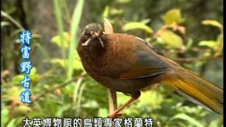 走在台灣的脊樑上【第 1 集】天神的足跡—特富野古道 thumbnail