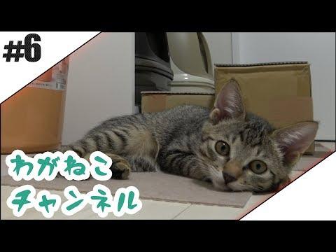 #6【吾輩】退助のやり方【猫】